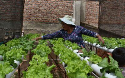 Les Soeurs Missionnaires Croisées de l'église d'Oruro promeuvent un centre de culture hydroponique.